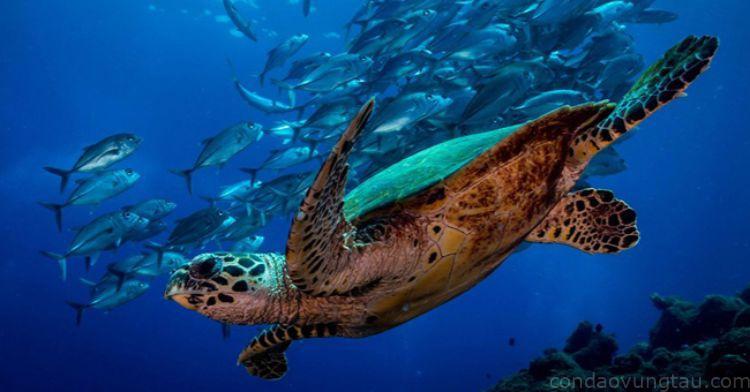 rùa biển đẻ trứng