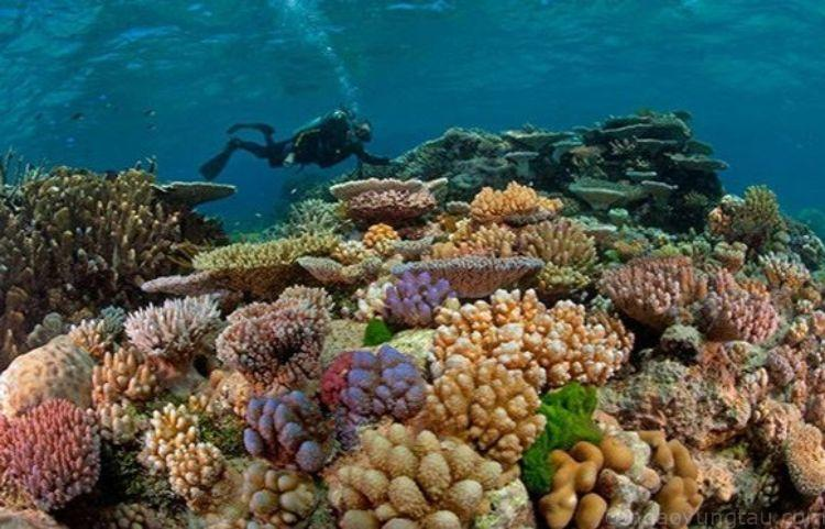lặn biển Côn Đảo