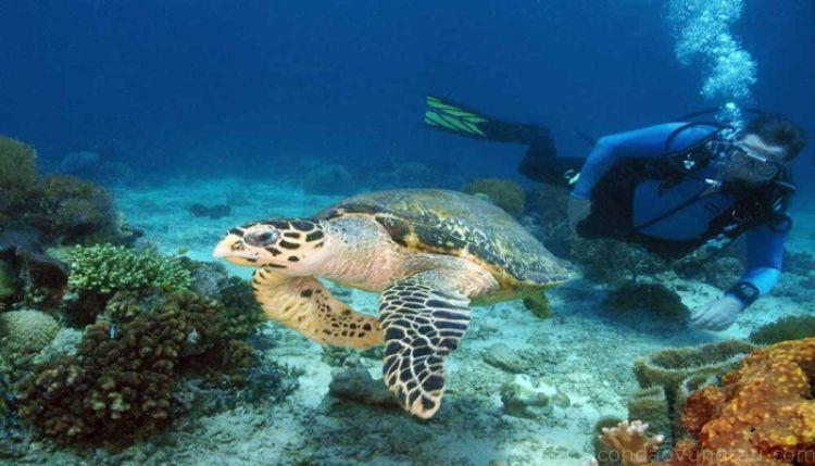 Sinh vật lạ ở biển Côn Đảo