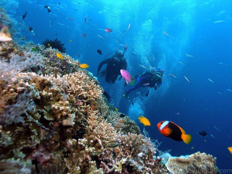 Kiểm tra vật dụng lặn biển