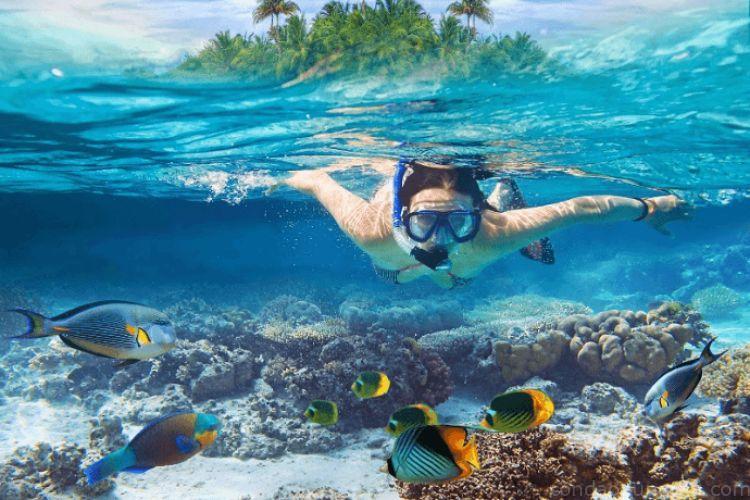 Ngắm san hô ở Hòn Tài